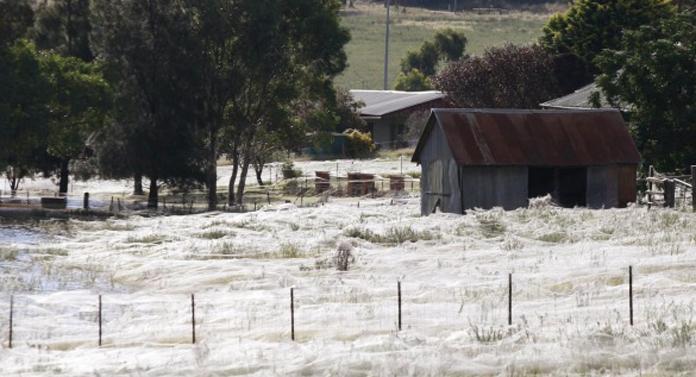 Invazie de păianjeni