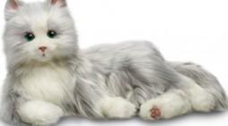 Mare atenție! Pisicile se pot infecta cu noul coronavirus