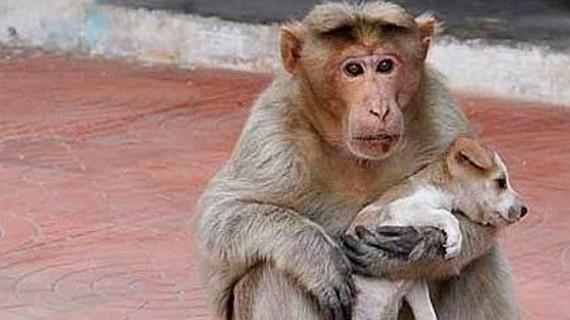 Înduioşător. Un căţel abandonat a fost adoptat de o maimuţă GALERIE FOTO