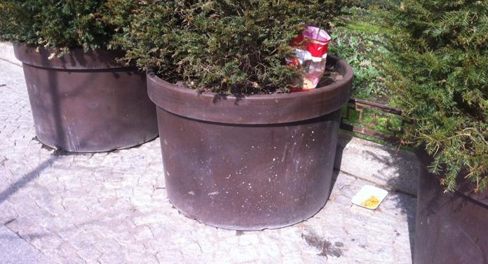 În oraşul teilor lui Eminescu e plin de fasole!