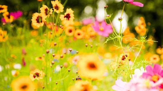 Simbolul florilor
