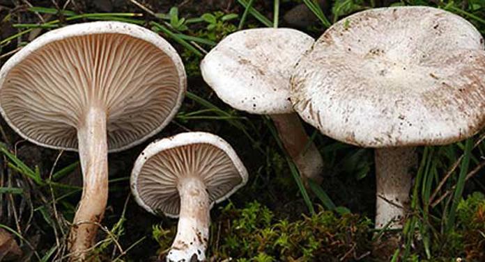 Cinci copii din Vaslui, la spital după ce au mâncat ciuperci otrăvitoare