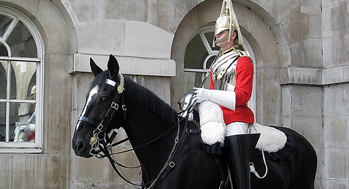 Încă doi cai pentru Poliția Locală