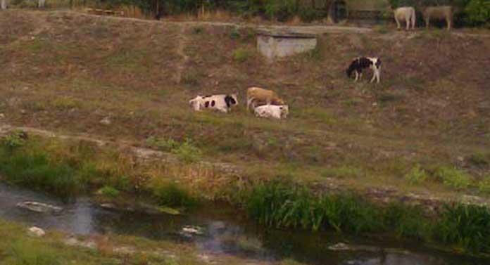 Indicatoare pentru cai și capre!
