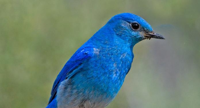 Misterul părului albastru