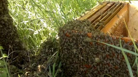 Trei fetițe băgate în spital de înțepăturile de albine sau viespi