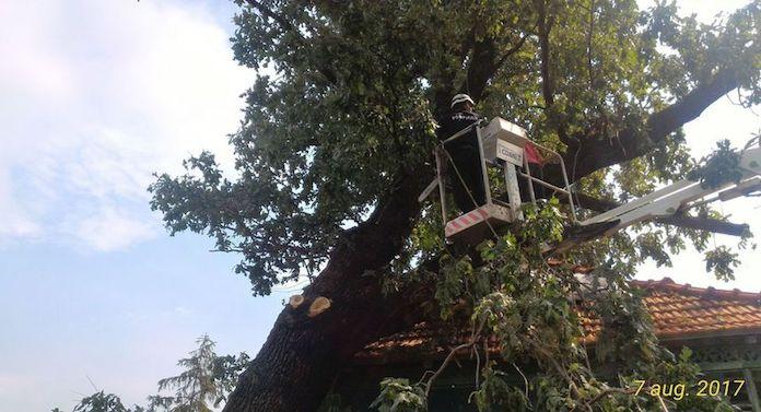 Un stejar de 150 de ani le-a căzut peste casă!