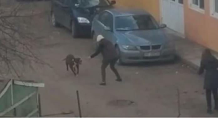Ce pedeapsă merită proprietara câinilor care au mușcat duminică 3 oameni?