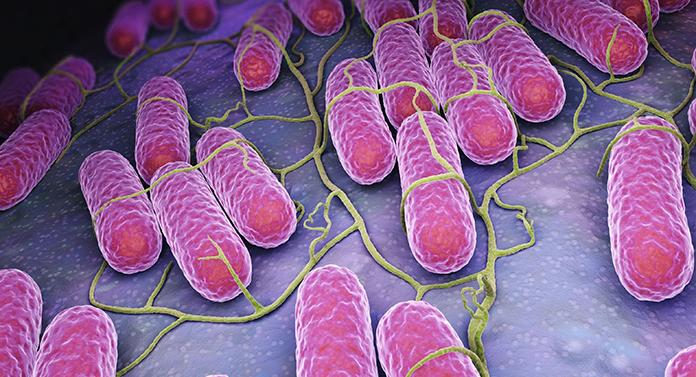 Dosar penal în cazul toxiinfecției cu Salmonella