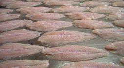 Peștele pe care-l cumpărați frecvent este o adevărată bombă la adresa sănătății