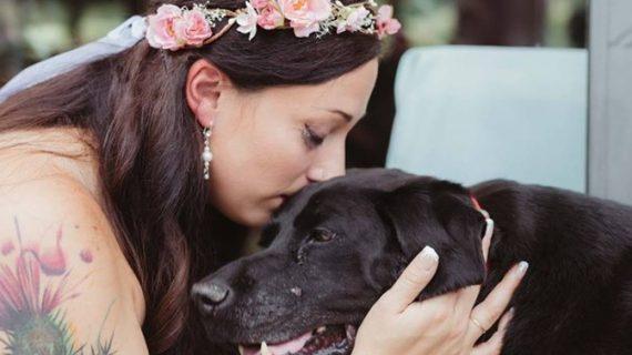 Bolnav de cancer, un câine s-a chinuit să nu moară pentru a asista la nunta stăpânei sale