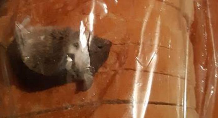Şoarece mort, găsit într-o pâine feliată!