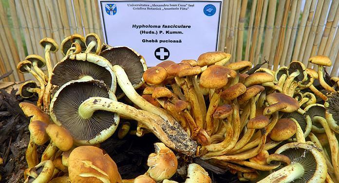 Expoziție de ciuperci comestibile și toxice, la Grădina botanică