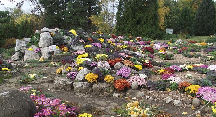 """Expoziția """"Flori de toamnă"""", la Grădina Botanică Iași"""